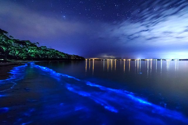 Bioluminescent Bay, Vieques, Puerto Rico
