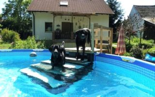 Best Above Ground Pool For Dogs
