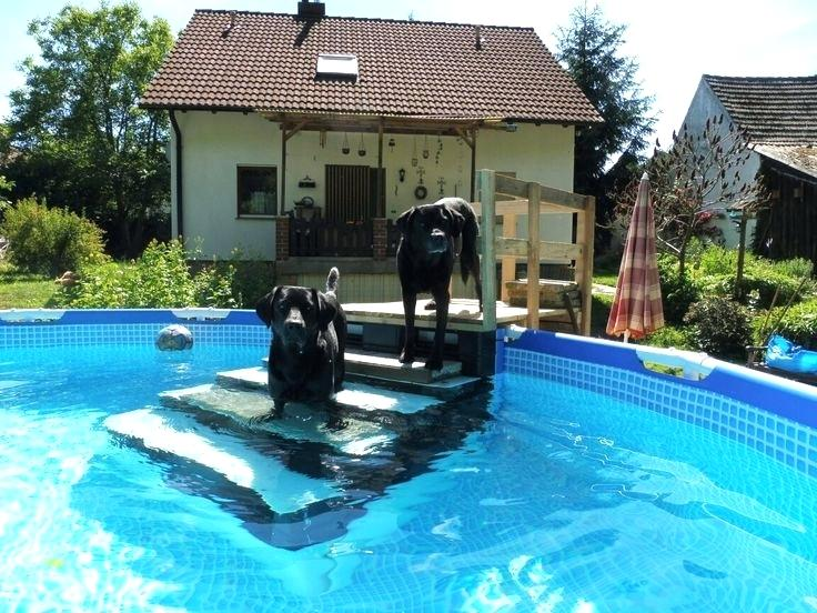 Top 10 Best Above Ground Pool For Dogs | Pool Clinics Reviews