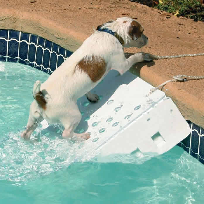 best Pool Ladders For Dogs
