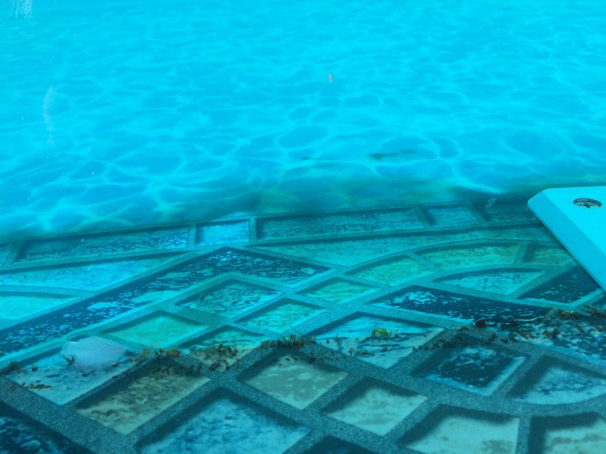 Black Spot Algae in Your Swimming Pool
